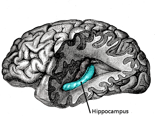 hippocampus and depression